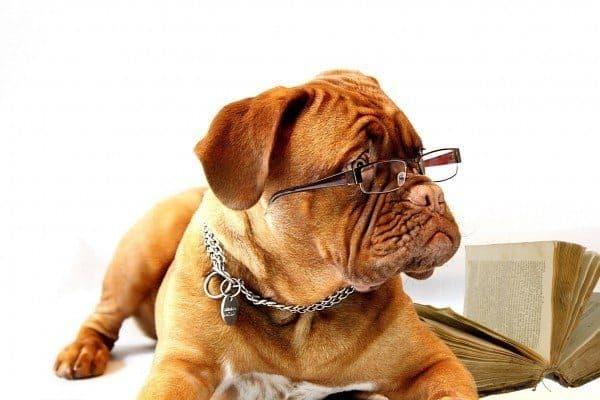 Proofreader or proof reader is a strange breed